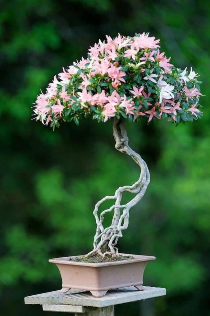 Карликовые Деревья для Дома Выбор и Советы Экспертов