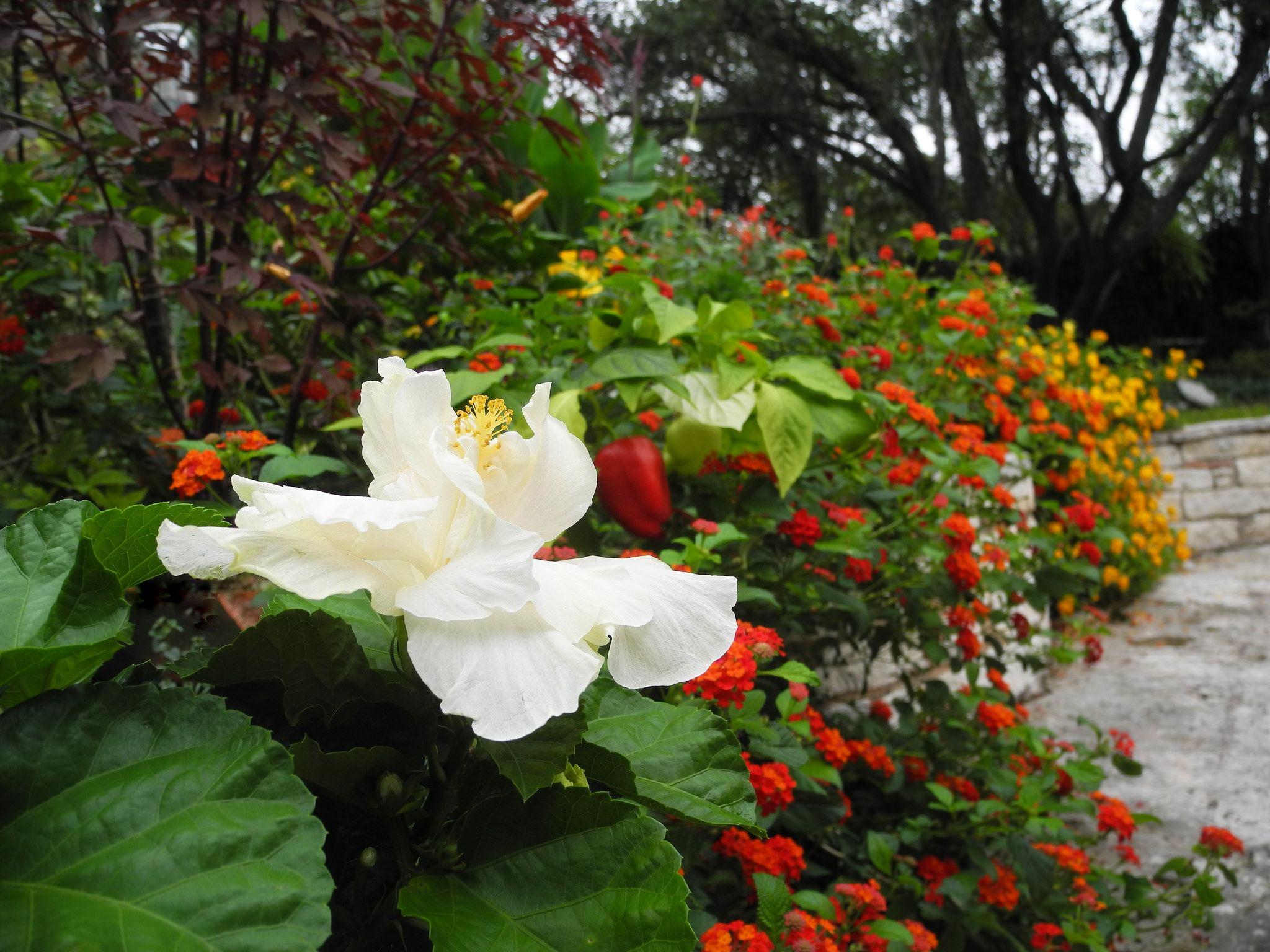 Яркая цветочная изгородь в ландшафтном дизайне