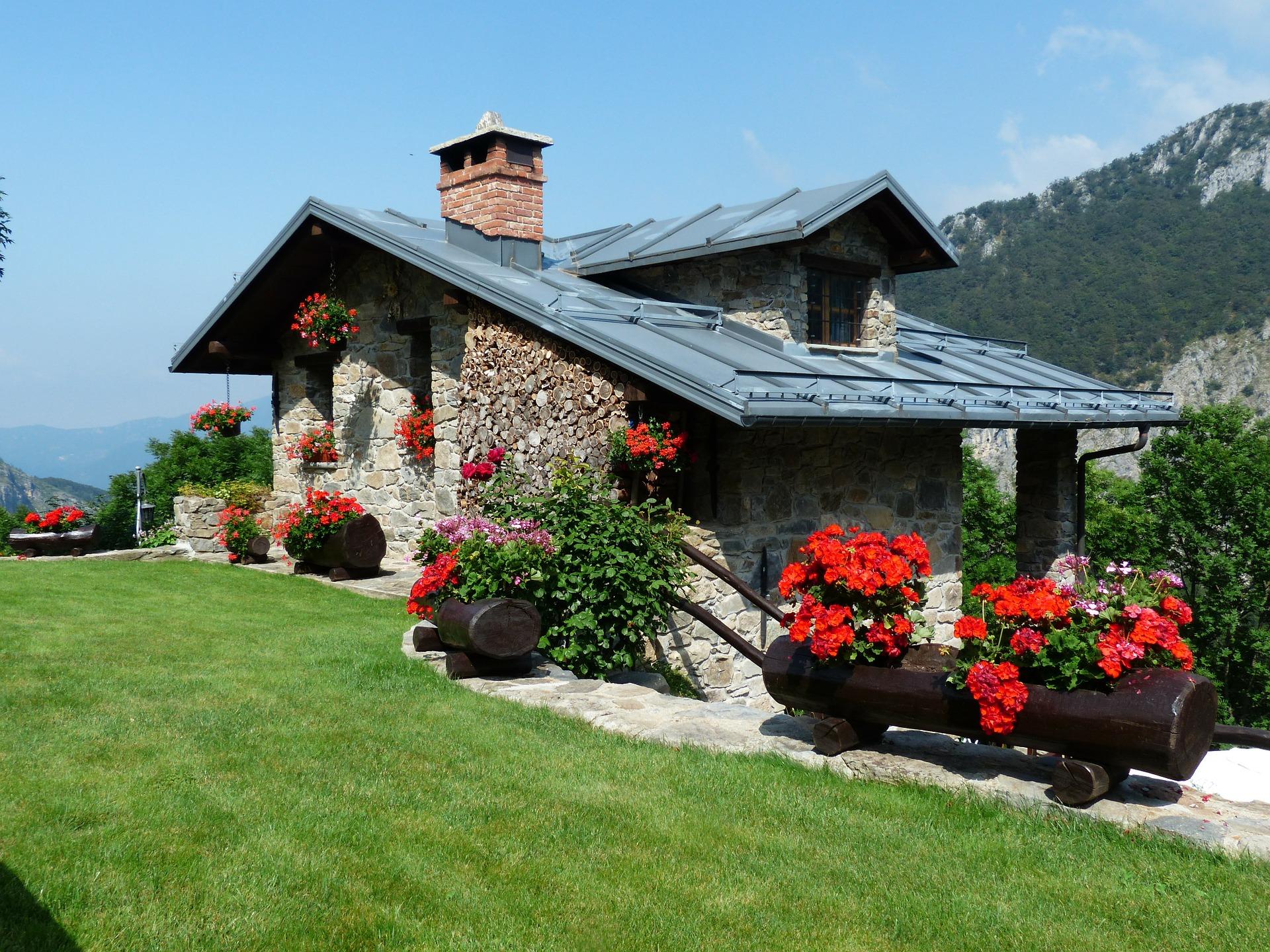 Кусты пеларгонии, перенесенные в клумбы - отличное дизайнерского решение для двора домика в горах